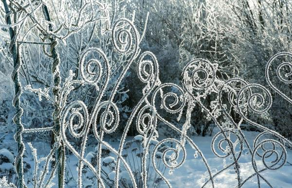 Изморозь посеребрила кованые опоры для растений