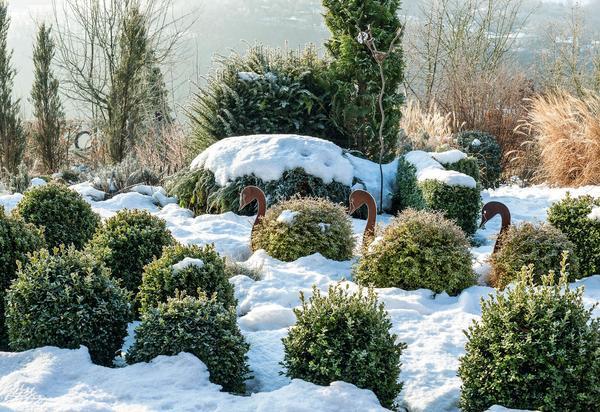 Три лебедя плывут средь белых волн - когда снежный покров укутывает землю и кустики четко выделяются на белом фоне, изящные птицы смотрятся особенно эффектно