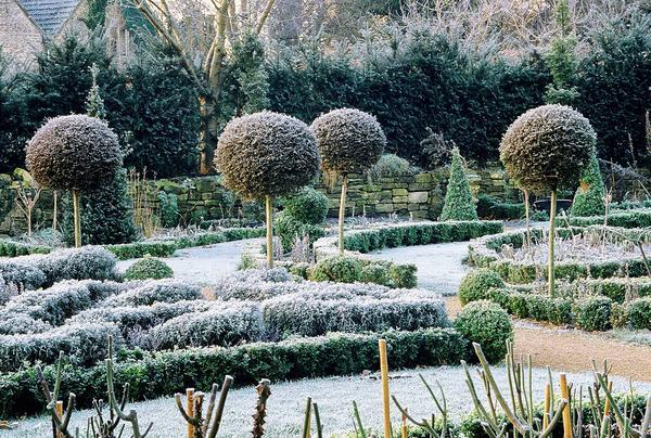 Деревья с шаровидными кронами структурируют садовый пейзаж во все времена года