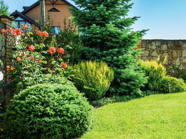 Древесно-кустарниковый миксбордер