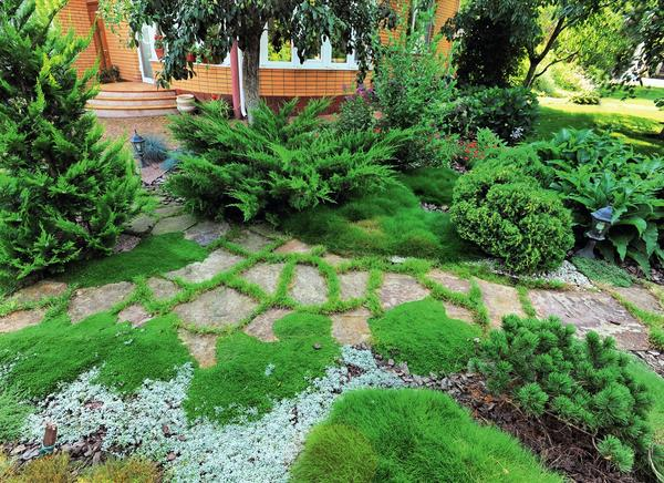 При планировании строений и посадок на участке непременно учитывайте наличие грунтовых вод, тип почвы, розу ветров, освещенность той или иной зоны