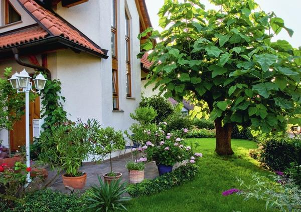 Павловния войлочная (Paulownia tomentosa) с крупными листьями великолепно притенит любое место отдыха. Для хорошего роста ей необходимо солнечное место