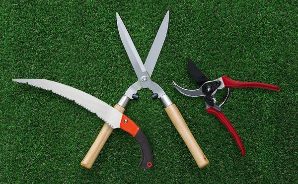 В минимальный набор для обрезки входят садовые ножницы, секатор и ручная пила