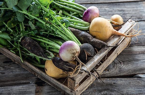 Раньше эта древняя овощная культура присутствовала на каждом столе