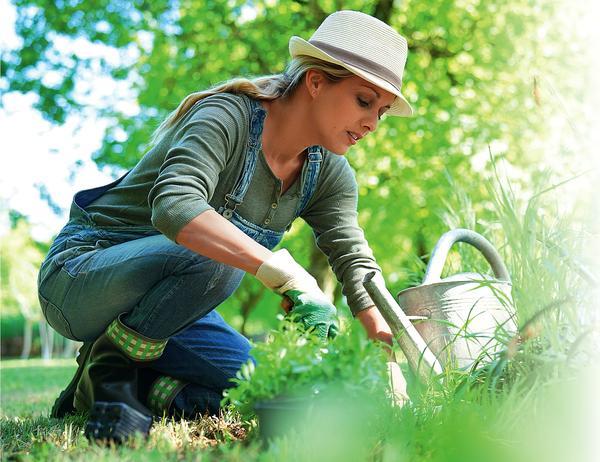 Садоводы и дачники успешно применяют в борьбе с вредителями и болезнями растений самодельное биологическое оружие