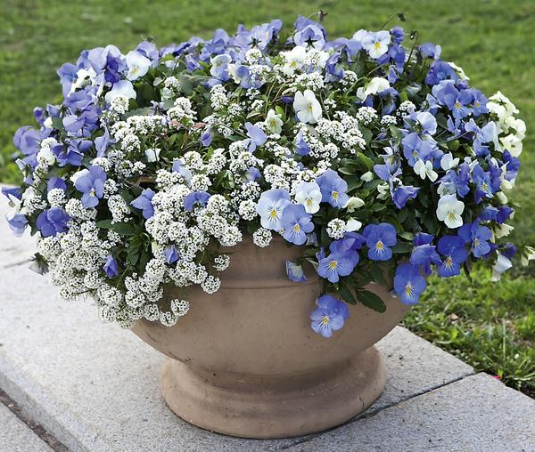 Одно из основных правил — сажаем растения практически вплотную, чтобы сразу получить декоративный вид