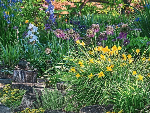 Уже в июне многие дикорастущие виды красоднева украшают посадки желтыми цветками