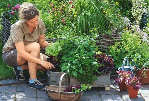 Объемный контейнер позволит регулярно получать отличный урожай салата и пряных трав