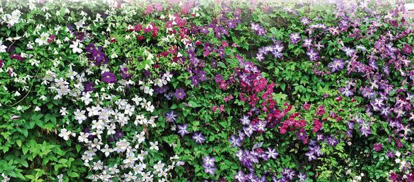 1. Создаем цветущую стену