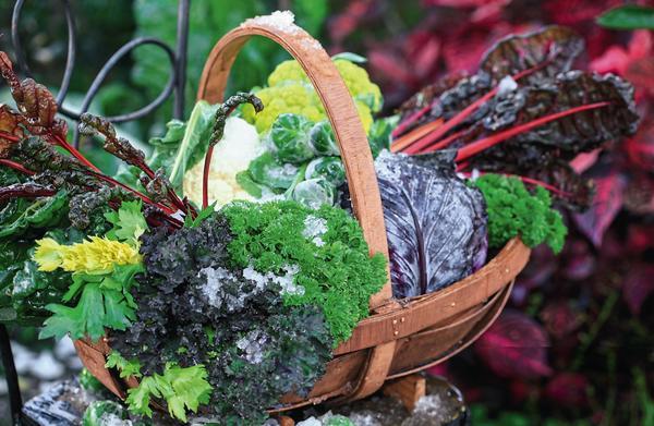 При правильном планировании собирать урожай в огороде можно до поздней осени
