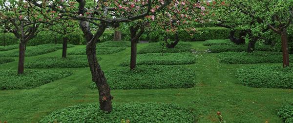 Приствольные круги или квадраты можно засадить геранью кембриджской Biokovo