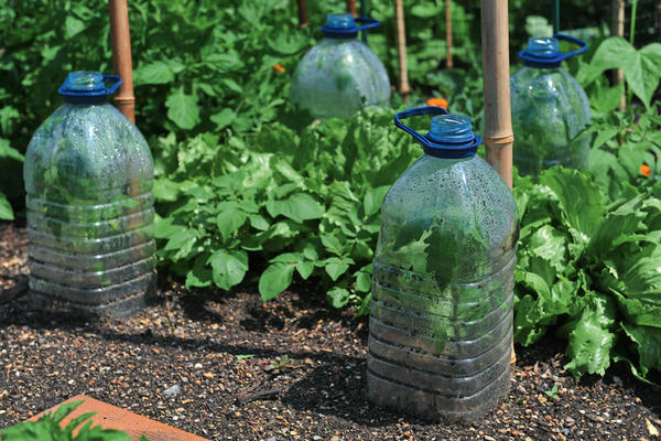 Мини-парники из пятилитровых пластиковых бутылей для воды