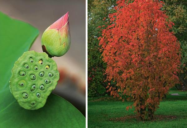 Слева: размытие заднего плана. Справа: пример гармоничного сочетания по цвету объекта и фона