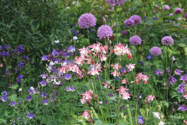 У каждого в саду найдется парочка эффектных многолетних растений