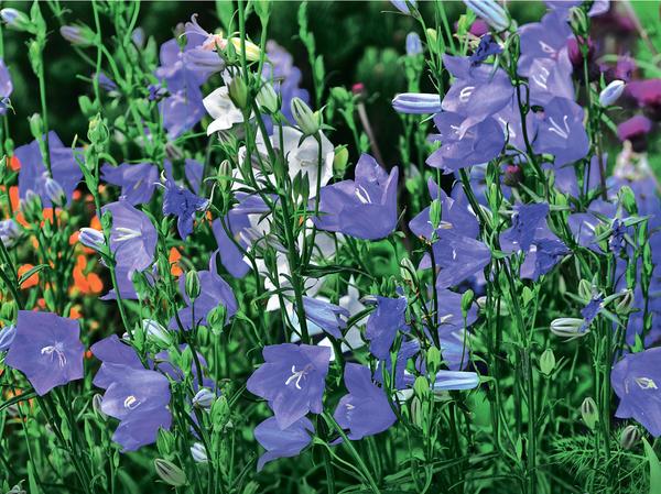 Цвет настроения – синий