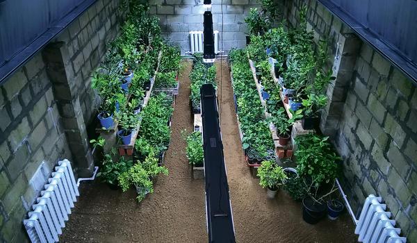 Оранжерея, специально построенная для коллекции субтропических и тропических растений. Фото П. Зимина