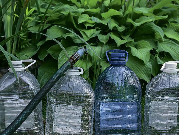 Пластиковые бутылки для сада. Фото Ирины Кудриной