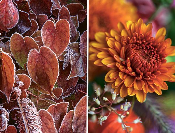 Осень - самое уютное время года - Страница 2 20a17d-nomark