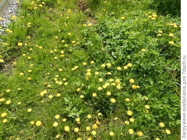 трава не по пояс, но очень много