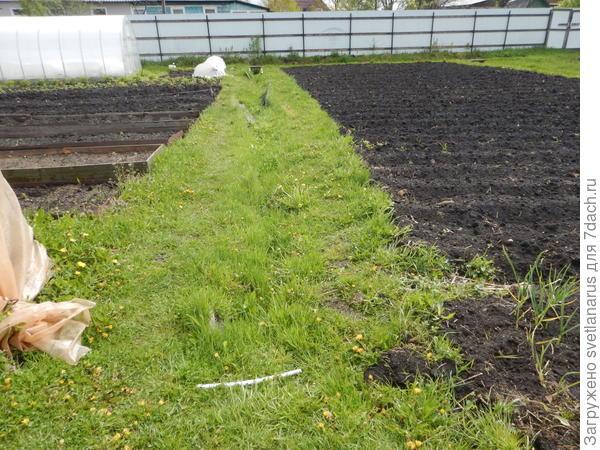 дорожка между огородами