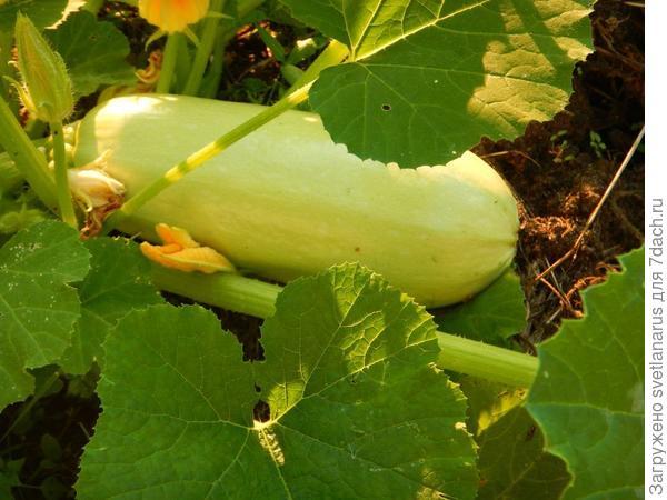 28 июля первый плод