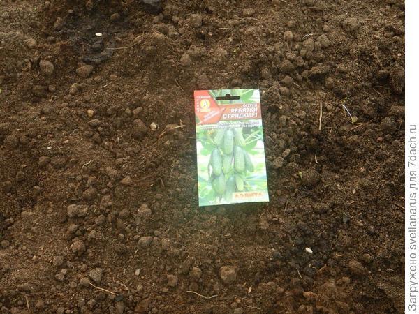 16 мая посев семян