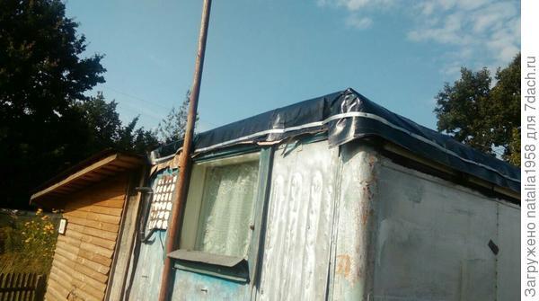"""В следующем году """"запущу ее"""" на крышу большого сарая и вагончика, вот будет ей раздолье! а урожая!!!))))"""