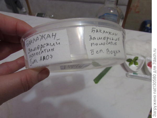 как я подписала контейнер для каждого вида семян и способов