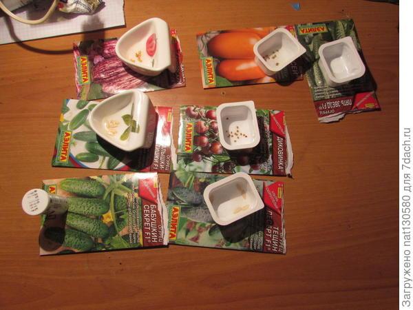 (на фото показано много семян так как замачивала сразу несколько видов на в разных емкостях)