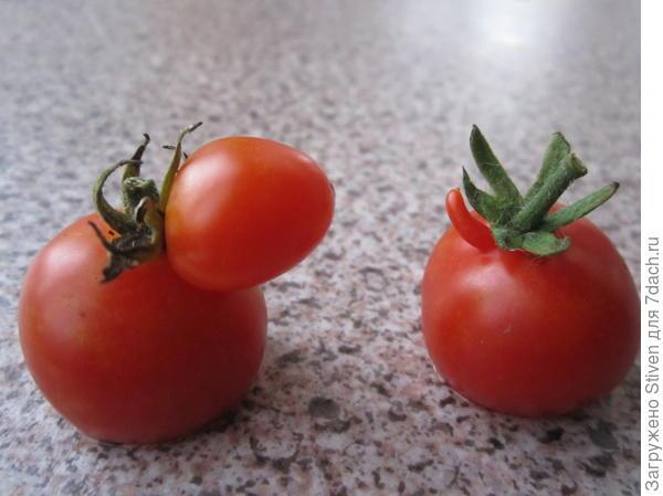Носатые помидоры