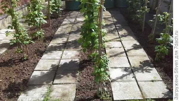 Чистота почвы с помощью мотыги
