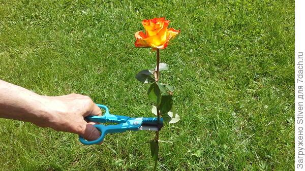 Срезание цветов