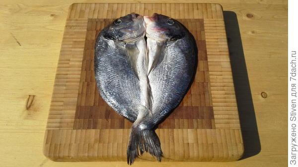 Рыба дорадо после разделки
