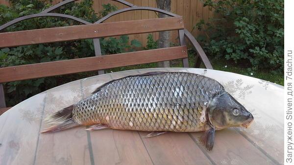 Кушай котик - свежая рыбка на 8,5 кг.