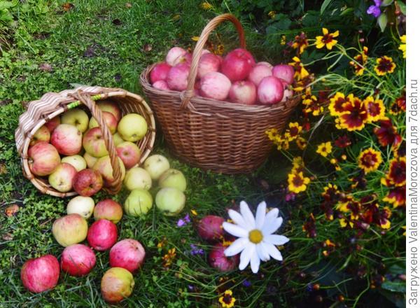 Осень дарит всем прекрасные подарки!