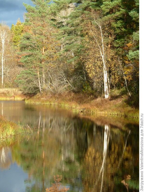 У  нас река и лес рядом.