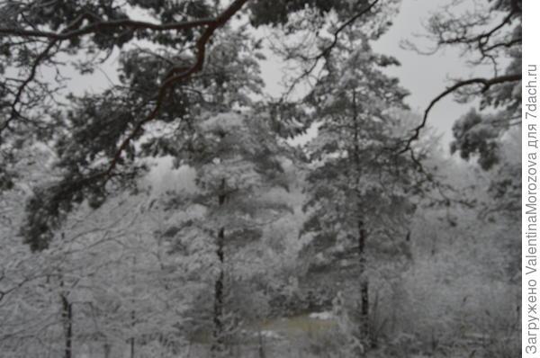 В лесу всё снегом замело.