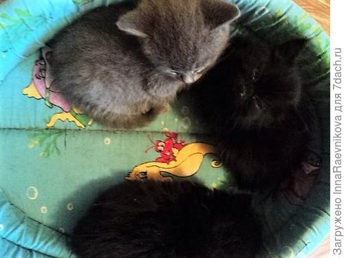 согрелись и спят