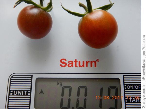вес томатов