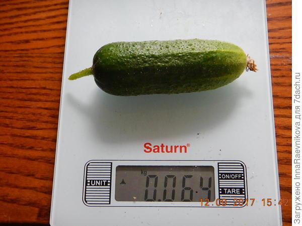64 гр