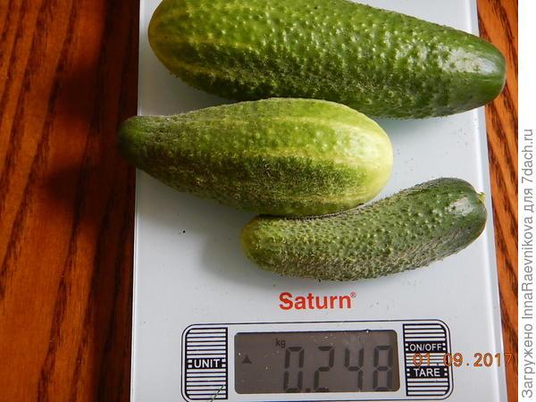 248 гр