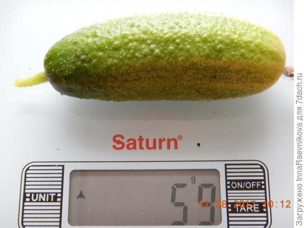 59 гр