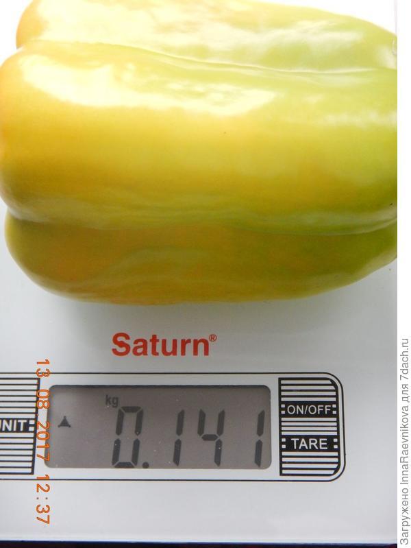 141 гр
