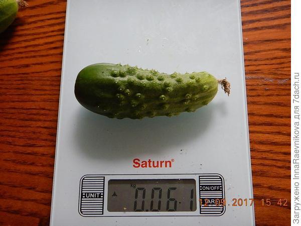 61 гр