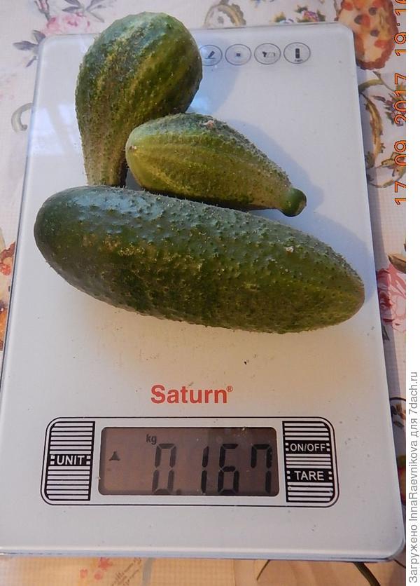 167 гр