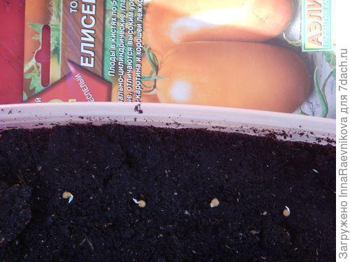16 марта замоченные семена