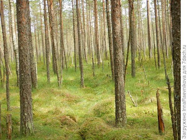 Сырой лес
