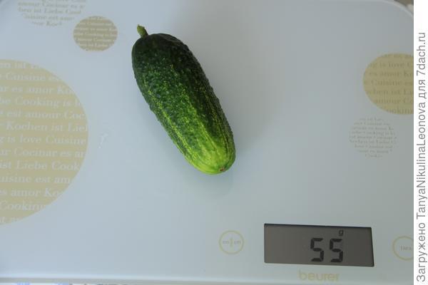 Вес первого огурца