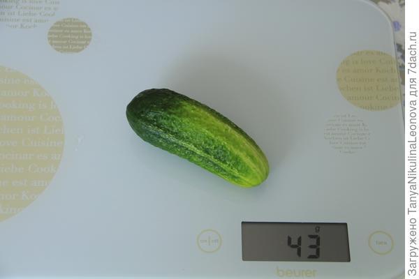 вес второго огурца