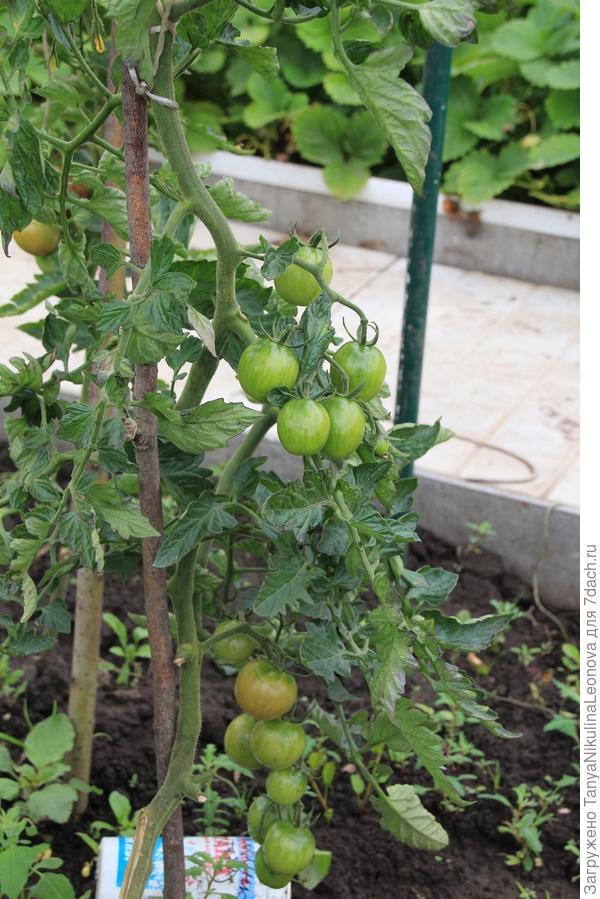 второе растение